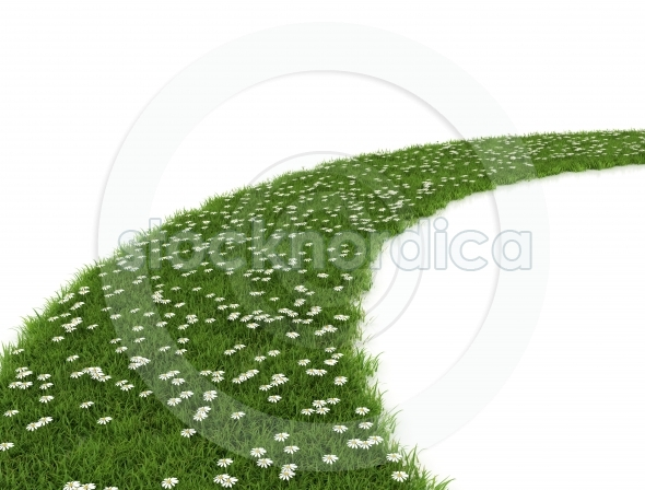 pathway made of grass and white flowers