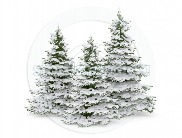 Christmas pine trees covered in snow