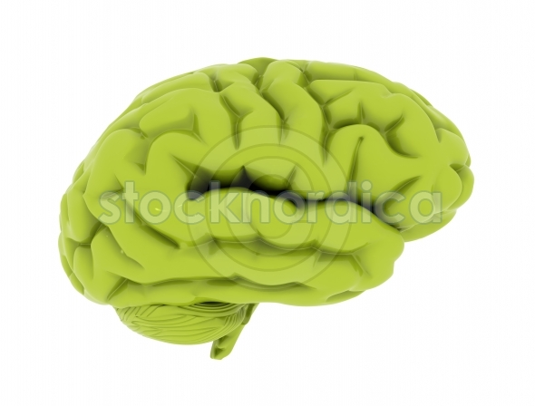 Green brain isolated on white background