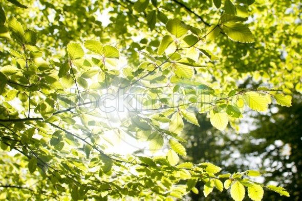 Summer branch with fresh green leaves